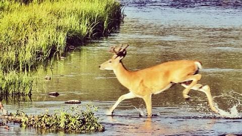 Oh. Deer. #avalon7 #thinkoutside #jacksonhole www.avalon7.co