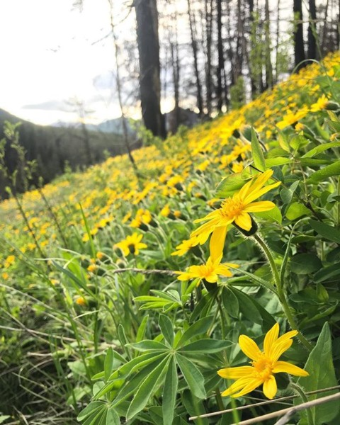 The wildflowers are going off in the @jacksonhole backcountry. Get out and Adventure! #seekthestoke #wildflowers #inspiredstate